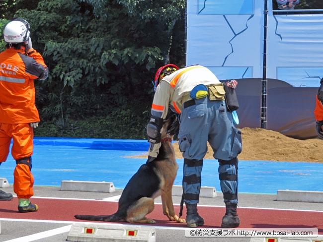 災害救助犬をハンドラーが回収。この訓練した日は非常に気温が高かったせいか、捜索対応後は日陰へと退避されていました。