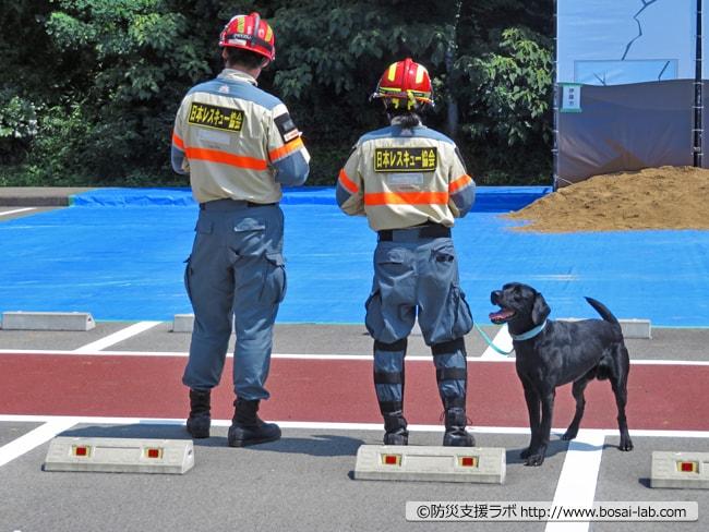 もう一頭の災害救助犬(レトリバー)も参加。